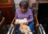 Терапии животных: последствия и примеры лечения