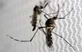 С начала года в Украине зафиксировано 29 случаев заболевания малярией импортные, 3 пациентов с малярией, умерли