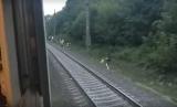 Появилось видео нападения на городское граффити-поезд