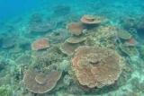 Задержанные за хранение кораллов россиянки рассказали о тайской тюрьме
