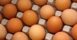 Следы фипронила в яйцах обнаружены уже в 12 странах Европы