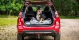 Nissan приспособила кроссовер для собак