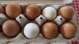 Отличие яйца и их польза