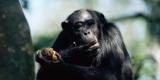 Вьетнам намерен увеличить поставки обезьян в России
