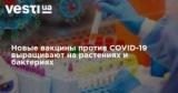 Новые вакцины против COVID-19 выращивают на растениях и бактериях