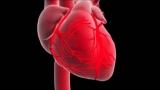 Сколько инфарктов может перенести человек? Причины, симптомы и лечение инфаркта